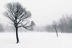 Willows in Winter Fog (Vesa Pihanurmi) Tags: park winter blackandwhite white snow tree monochrome silhouette vintage landscape helsinki artistic willow lauttasaari