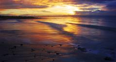 Scarborough Sunrise || REFLECTIONS (rhyspope) Tags: sunset cloud sun man color colour beach sunrise canon fishing fisherman marine queensland scarborough 500d rhyspope