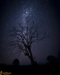 Stop The World (southern_skies) Tags: tree night stars exposure myplace milkyway