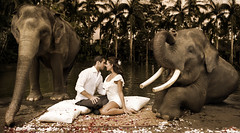 Everyday in Bali A loves Story Unflods (Mio Cade) Tags: wedding bali elephant river indonesia groom bride couple image romance safari elephants prewedding elephantsafari gianyar pixeldust pixeldustimagescom