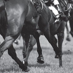 Horseracing (400_design) Tags: horse animal sport racetrack race speed track power ride muscle competition run jockey pure equestrian saddle thoroughbred equine courage gallop determination horserace compete stamina purebreed