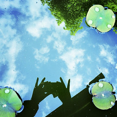 Reflection (yocca) Tags: blue sky reflection green me topf25 wow leaf lotus myhand 4s 2012 iphone reflectionlove may2012