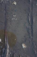 IMGP5065_Honfleur.jpg (Crapounifon) Tags: vertical gris eau traces terre normandie honfleur marron couleur vacance feuille pourri flaque abstrait boue vã©gã©tal