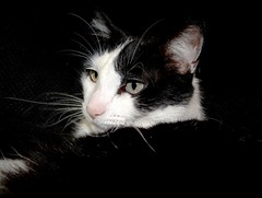 """Ozzy"" (EcoSnake) Tags: friends cats pets fun ozzy adoptions"