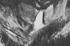 Lower Falls (wenzday01) Tags: park travel bw nature river waterfall nationalpark nikon monotone canyon falls adobe yellowstonenationalpark yellowstone wyoming nikkor rhyolite lowerfalls yellowstoneriver wy lightroom lookoutpoint d90 nikond90 canyonrhyolite 18105mmf3556gedafsvrdx