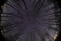 A Fisheye View of the Forest Night (Radical Retinoscopy) Tags: nightphotography trees silhouette composite forest stars pennsylvania fisheye pa astrophotography astronomy nightsky 8mm astrophoto startrail forestnight canont2i canoneost2i canon815mm starstax