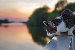 (dagomir.oniwenko1) Tags: color animals cat canon sigma  canoneos7d sigmadc1750