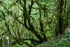 Expansion territoriale (Collabois) Tags: nikon cairn chemin mousse pyrnes fes fougres d600 randonnes baronnies dryades gourguedasque