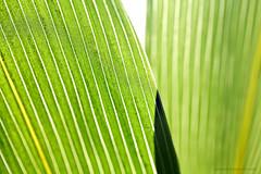 Cells of a leaf (Amlie Rose Pritchard) Tags: colour green leaves grid leaf bright cells pinstripe naturalform