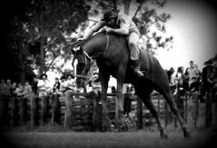 Augusto Oliveira (Eduardo Amorim) Tags: brazil horses horse southamerica brasil criollo caballo cheval caballos cavalos pelotas pferde cavalli cavallo cavalo gauchos pferd riograndedosul pampa hest hevonen campanha brsil chevaux gaucho  amricadosul fronteira hst gacho  amriquedusud  gachos  sudamrica suramrica amricadelsur  sdamerika crioulo caballoscriollos criollos jineteada   americadelsud gineteada  crioulos cavalocrioulo americameridionale caballocriollo eduardoamorim cavaloscrioulos