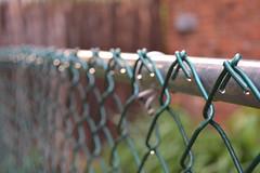Drops on a Fence (alexapettitdesign) Tags: green water field rain fence backyard nikon wate