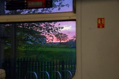 Train Sunset (elizunseelie) Tags: city pink trees houses sunset summer sun plant tree window nature grass station night clouds train evening scotland glow purple pentax glasgow vibrant transport scottish frame tamron k5 pentaxart