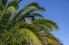 Palm Leaves (Preston Ashton) Tags: blue light sky tree green lamp leaves sunshine leaf day post sunny palm foliage tropical prestonashton