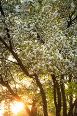 Spring Campus Flowers-28