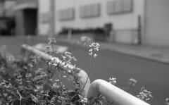 160505_PentaxME_013 (Matsui Hiroyuki) Tags: pentaxme fujifilmneopan100acros jupiter985mmf20 epsongtx8203200dpi