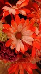 a mama's bouquet (nfin (verna R)) Tags: bouquet excellentsflowers esenciadelanaturaleza picmonkey anorangebouquet