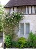 Une maison ancienne avec rosier à Provins (toucanne) Tags: old flowers roses house window rose climbing maison ancienne pierrederonsard
