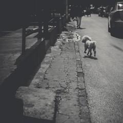 Street Dog (Photo Alan) Tags: china street shadow dog pet zeiss outdoor beijing streetphotography shadowplay streetdog