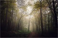 In the woods (barbara.zemann) Tags: baum trees tree wienerwald natur nature wald vienna forest