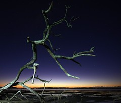 Torched (pominoz) Tags: lightpainting tree sunrise nsw portstephens swanbay