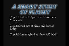 High Speed Flight (Inanimate Carbon Rod) Tags: bird birds speed high 10 flight casio adobe elements hi premiere exfh100