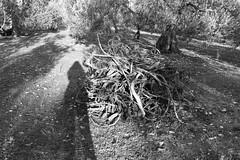 (DelilahBaggins) Tags: white black alberi ombra sole bianco nero legna