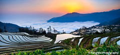 Sunrise Over the Terrace Field (Feng Wei Photography) Tags: china travel light vacation sky panorama cloud sun mountain inspiration color tree nature beautiful beauty horizontal rural forest sunrise wonderful wonder relax landscape scenery colorful asia terrace outdoor vibrant horizon rustic scenic vivid panoramic remote yunnan inspire magical yuanyang terracefield gettyimageschinaq3