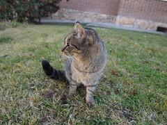 Profile (roroproject) Tags: madrid cats playing cute cat garden kitten funny tabby kittens kitties aww