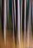 The Forest abstraction (Lukjonis) Tags: camera trees abstract art nature colors forest painting photography photo movement exposure lukas abstraction lithuania icm intentional lietuva canonef100mmmacrousm abigfave impressedbeauty canoneos40d jonaitis lukjonis yahoo:yourpictures=landscape