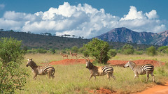 Welcome to Tsavo (Joost N.) Tags: africa blue trees red wild mountains green grass animal clouds bush nikon kenya african stripes wildlife hills safari filter zebra afrika nikkor plains attention gazelle kenia antilope tsavo safaris polarisation d700