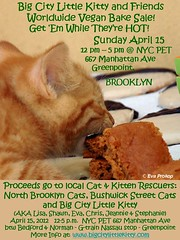 WORLDWIDE VEGAN BAKE SALE! (nyseiler) Tags: rescue baby brooklyn cat vegan bottle kitten sale foster worldwide return adopt tnr bake trap neuter spay relase northbrooklyncats bigcitylittlekitty bushwickstreetcats