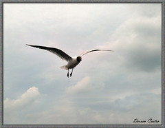 I wanna fly, so high.. (dee_castro) Tags: birds terschelling vogels