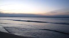 IMG_5814 (Martina Mastromonaco) Tags: beach vineyard martha s subset