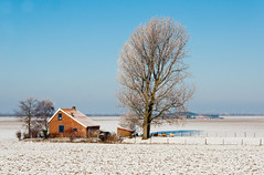 Boerderij in de sneeuw - Dutch farm in winter (RuudMorijn) Tags: old travel blue winter red sky white house snow cold tree window nature netherlands dutch field farmhouse barn rural vintage fence season landscape outdoors countryside frozen scenery colorful exterior view sheep natural outdoor snowy farm country sneeuw farming rustic scenic meadow scene farmland boom explore pasture environment agriculture lucht picturesque idyllic kale blauwe brabant tranquil hemel landschap frosted kleurrijk noordbrabant boerderij kleur brabants landelijk rijp gebied berijpt deheen agricultuur ringexcellence