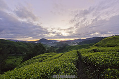 BEFORE RISING (HeSoMe CollectionS) Tags: sunrise sony alpha slt boh a77 teaestate cameronhighland sgpalas hesome