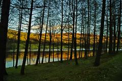 y=0.5x (sidibousaid60) Tags: uk trees lake water lines vertical horizontal reflections landscape derbyshire peakdistrict silhouettes reservoir ladybower bamford