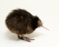 New Zealand Ambassador Names National Zoo Kiwi...