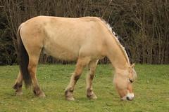 Pferd (karlmimbach) Tags: horses tiere pferde haustiere fohlen