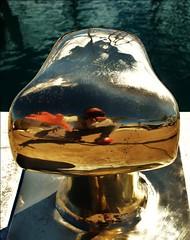 My first day in Lanzarote III (Seigar) Tags: reflection reflections island mirror lanzarote vision reflect espejo reflejo reality otra isla reflejos visin prisma realidad reflejar misello efectoespejo theblueheart visionado theblueheartbeat seigar