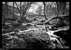 Scotland (Fraser.Price) Tags: wood old uk longexposure trees light shadow lake mountains tree nature water forest river landscape outdoors scotland blackwhite moss nikon rocks exposure mountin