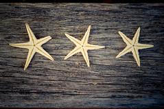 * * * (ana.gr.) Tags: wood sea mar madera starfish background driftwood fondo estrellademar
