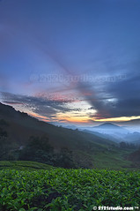 Sunrise (DRI) (2121studio) Tags: nature sunrise dawn nikon ali malaysia indah cameronhighlands kuantan alam malaysianphotographer drali sgpalasteaplantation 2121studio kuantanphotographer pahangphotographer ciptaanallahswt 0139342121 nubleebinshamsubahar