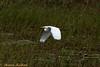 IMG_5775L (Sharad Medhavi) Tags: bird canoneod50d mangomistresortkarnatakastatehighway87