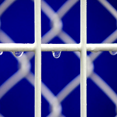 Wet fence (tanakawho) Tags: blue white abstract wet water rain fence crossing dof bokeh line rainy squareformat refraction curve raindrop tanakawho visionqualitygroup