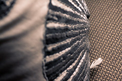 6638 (mixed alternative) Tags: brown house texture beach thread field lines canon grey amber focus shiny bokeh patterns feather pillow fabric shallow tones depth 1740mm shimmer linear 50d 6638 mzheng