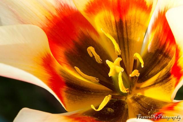 DDflowers-6