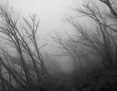 MtStirling2012_001 (TomT2010) Tags: park white mist black mt stirling alpine national snowgums