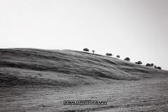 IMG_4515 (JORALD) Tags: california ca white black animals monterey pacific wildlife