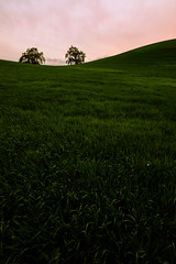 Green Grass (killersnowman) Tags: trees sunset tree grass oak fuji hills rolling pasorobles 1024 xt1