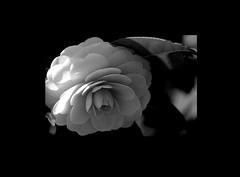 silent (karakutaia) Tags: sun tree love nature japan paper temple japanese tokyo heart superb card e simply sogno rockpaper afotando flickraward flickrglobal elementsorganizer allbeautifulshotsandmanymoreilovenature flowerstampblackandwhite transeguzkilorestreetarturbanagreatshotthisisexcellentcontestmovementricohgxrserendipitygroupbluenatureicapture flickraward5jtra realtabstract